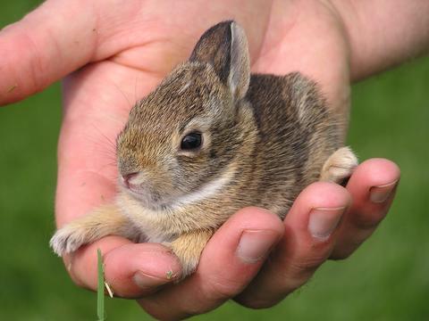 ハート 折り紙 ウサギの折り方 折り紙 : news.mynavi.jp